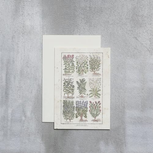 Herbs Greeting Card